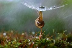Vadim Trunov, a self-taught nature photographer based in Voronezh, Russia, takes beautiful macro photos of snails, insects and mushrooms that seem to personify them and weave beautiful little stories around these oft-overlooked creatures' lives. Photographie Macro Nature, Photo Macro, Fotografia Macro, Robert Doisneau, Photography Competitions, Belle Photo, Animals Beautiful, Mother Nature, Bugs