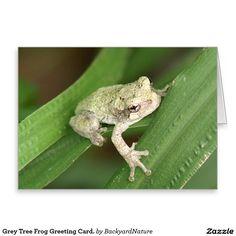 Grey Tree Frog Greeting Card. Greeting Card