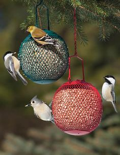 Chickadees, a Tufted Titmouse, and a Goldfinch enjoying some whole sunflower hearts from our No/No Bird Seed Balls -- I love these little #birds!