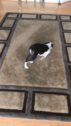 Cute Funny Dogs, Cute Funny Animals, Cute Baby Animals, Funny Puppies, Animal Jokes, Funny Animal Memes, Funny Animal Pictures, Funny Dog Videos, Cute Animal Videos