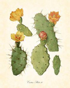 Vintage Botanical Art Print Flowering Cactus No. by BelleArtPrints Vintage Botanical Art Print Flowering Cactus No. by BelleArtPrints Vintage Botanical Prints, Botanical Drawings, Antique Prints, Botanical Art, Illustration Art, Illustrations, Cactus Art, Arte Floral, Art Prints