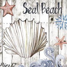 shells sea beach