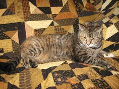 """Stella Bella Quilts: """"Pets on Quilts"""" Quilt Show"""