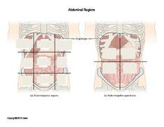 appendicular skeleton labeling worksheet worksheet workbook site physiology pinterest. Black Bedroom Furniture Sets. Home Design Ideas
