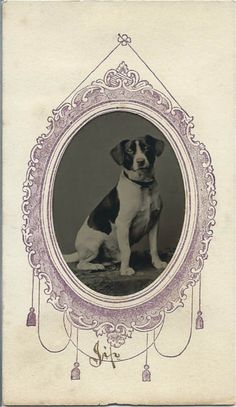 "April 1865 tintype of dog named Jip. Name of dog is written in ink on bottom front of paper sleeve. Photo by T.R. Burnham, 247 and 113 Washington St., Boston. Two-cent tax stamp on back with photographer's initials and ""Apr."" Verso reads: New style card ferreotypes, made cheap and finished in 10 minutes, only by T. R. Burnham. From bendale collection"