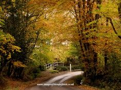 Autumnal beauty of The New Forest, Hampshire