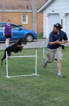 Dog Agility and Why It Rocks! http://ferndogtraining.com/dog-agility-and-why-it-rocks/