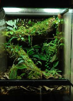 Simple cork tube build with extensive plant list of mini broms and orchids