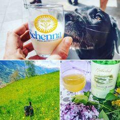 #Wiederunterwegs auf der Bauernhöfe-Wanderung von Verdins nach Schenna. Coffee zeigte großes Interesse an der frischen Milch an Speck Wiesen und Katzen. Wanderwege wie geschaffen für uns und immer mit Aussicht :-) @schenna.scena @visitsouthtyrol @wiederunterwegs