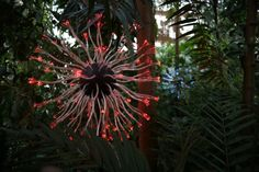 Bruce Munro: Light in the Garden Atlanta Botanical Garden, Botanical Gardens, Fusion Art, Light Architecture, Light Art, This Is Us, Bloom, Lighting, Exhibitions