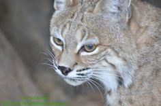 Omaha Zoo June 2013