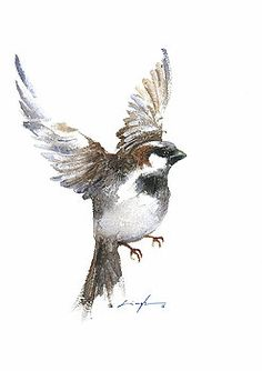 Flying sparrow watercolor by Nitin Singh