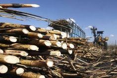 Arquitectura sustentable: Materiales de construcción ecológicos