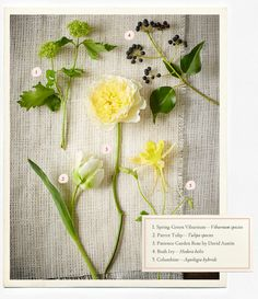 Wedding Flowers Guide – Types & Ideas | B-Inspired | BHLDN