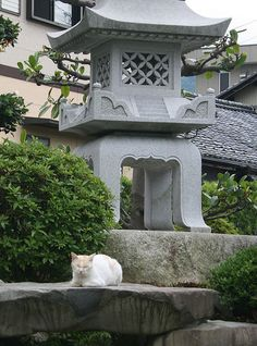 Japanese garden cat