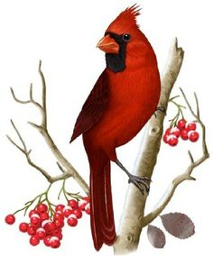 On winter evenings, the cardinals are always the last birds to visit our feeders. In the deep dusk, they become no more than gray shadows m. Cardinal Tattoos, Red Bird Tattoos, Cardinal Birds Meaning, Cardinal Drawing, Backyard Birds, Bird Drawings, Bird Pictures, Vintage Birds, Animal Paintings