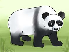 How to Draw a Panda. A panda looks like a bear with a black and white color. They are very cute in cartoons and in reality they look really nice and cuddly -- but they can be very aggressive at times when scared, shocked or irritated. Cartoon Panda, Cute Cartoon, Panda Drawing, Easy Drawings Sketches, Black And White Colour, Animal Drawings, Really Cool Stuff, Disney Characters, Fictional Characters