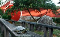 Did you know that inside the large compound of the Chinese Garden near the Bonsai display is an unusual Live Turtle & Tortoise Museum, where among other things, you can see a live two-headed, six-legged turtle - one of the few in the world ever to have survived - and a large pond literally teeming with the little, one-headed fellows. Nearest MRT: Chinese Garden; 5 mins walk from the station.