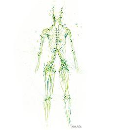 Lymphatic System Watercolor Print