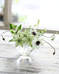 Mini bouquet with clematis flowers Ikebana, Green Flowers, Pretty Flowers, White Flowers, Nice Flower, Deco Floral, Arte Floral, White Clematis, Raindrops And Roses