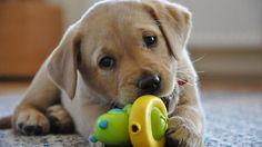 Me encantan los perros pequeños