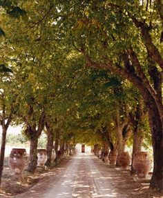 driveway lined with trees = beautiful and blissful privacy