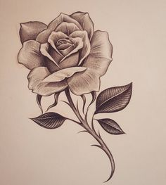 Early early morning rose inkdmonkey com losangeles westcoast mycrazylife rose southbay rosesketch pencil sketch chango… Rose Drawing Tattoo, Tattoo Sketches, Tattoo Drawings, Art Sketches, Sketch Drawing, Drawing Art, Pencil Drawings Of Flowers, Flower Sketches, Pencil Art Drawings