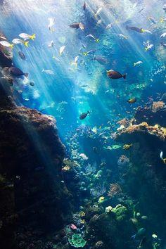Bajo el mar, hermosa variedad de especies marinas.