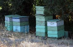French Laundry beehives by niallkennedy, via Flickr