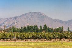Viña Undurraga Gardens - Maipo Valley - Chile / © Alexandre F de Fagundes