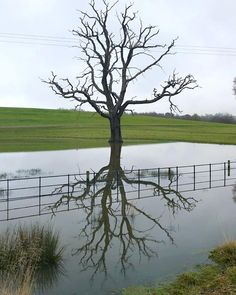 It's all about the upside down and reflection in today's photograph. Harris Millar ( took this photograph while walking near Launde Abbey in Leicestershire. Use and to share your pictures with us. Pictures Of England, England Countryside, The Upside, Big Picture, Travel Around, Britain, Traveling By Yourself, Reflection, Walking