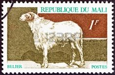 Domestic animals   issue shows a sheep,  stamp printed in Mali ,circa 1969