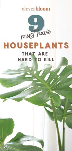 If you're looking for houseplants that are hard to kill, look no further! Check out these 9 must have houseplants by Clever Bloom. Indoor Floor Plants, Best Indoor Plants, Perfect Plants, Cool Plants, Planting Succulents, Planting Flowers, Houseplants Safe For Cats, Easy House Plants, Crassula Ovata