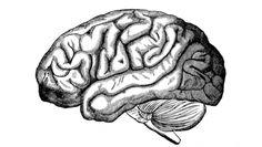 Sobrepeso y envejecimiento del cerebro sí están relacionados, asegura estudio