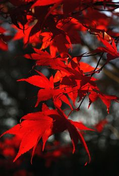 fall redwood trees