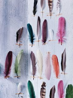 Feather collection - Sibella Court