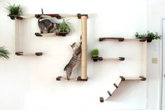 The Cat Mod Gardens Complex by CatastrophiCreations on Etsy