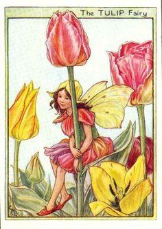 Gallery.ru / Фото #103 - 1_Flower Fairies - risau