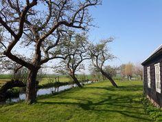Groenpartners is ook gespecialiseerd in het snoeien en onderhouden van historisch fruit Plants, Plant, Planets