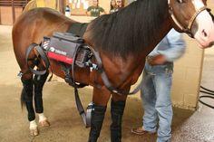 Easy Cryo America Horse Therapy, Horses, America, Easy, Animals, Animales, Animaux, Animal, Animais