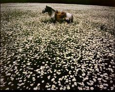 A lone horse by Linda Eastman McCartney