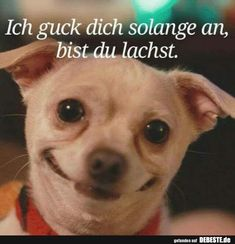 Ich guck dich solange an, bist du lachst. I'll look at you for so long, you're laughing . Funny Dogs, Funny Animals, Cute Animals, Funny Memes, Jokes, Funny Comments, Look At You, Man Humor, Really Funny
