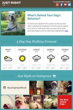 Purina included a local five-day weather forcast in this email to alert dog owners of the best days to walk their dogs. This email also included the latest Instagram photos with #justrightpetfood, and the feed was displayed at the bottom of the email.