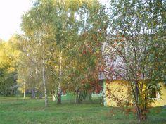 """База отдыха """"Затерянный рай"""", находящейся в 60 км от г.Бийска, рядом с.Новиково., Алтайского края"""