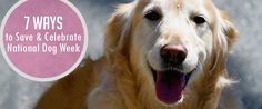 How are you celebrating National Dog Week? https://www.sitstay.com/blogs/good-dog-blog/220136775?utm_campaign=coschedule&utm_source=pinterest&utm_medium=SitStay%20Dogs&utm_content=7%20Ways%20to%20Save%20and%20Celebrate%20National%20Dog%20Week