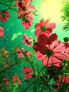 Flowers | Inspirational quotes & pictures via @BainUltra