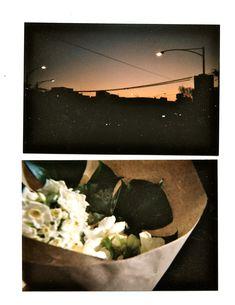E V I E C A H I R Disposable Camera / Recent Photographs : Morning Gradient and Flowers .