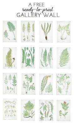 Ready-To-Print Gallery Wall: FREE Fern Botanicals