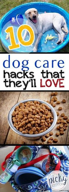 10 Dog Care Hacks That They'll LOVE|Dog Care, Dog Care Hacks, Pet Care, Pet Care Hacks, Easy Pet Care, Pet Care TIps and Tricks #DogCare #PetCare #LifeHacks #Hacks #doghacks #dogtricks