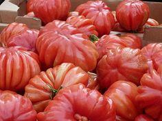 Deborah Lawrenson: Harem cushion tomatoes